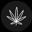 hemp plant in circle